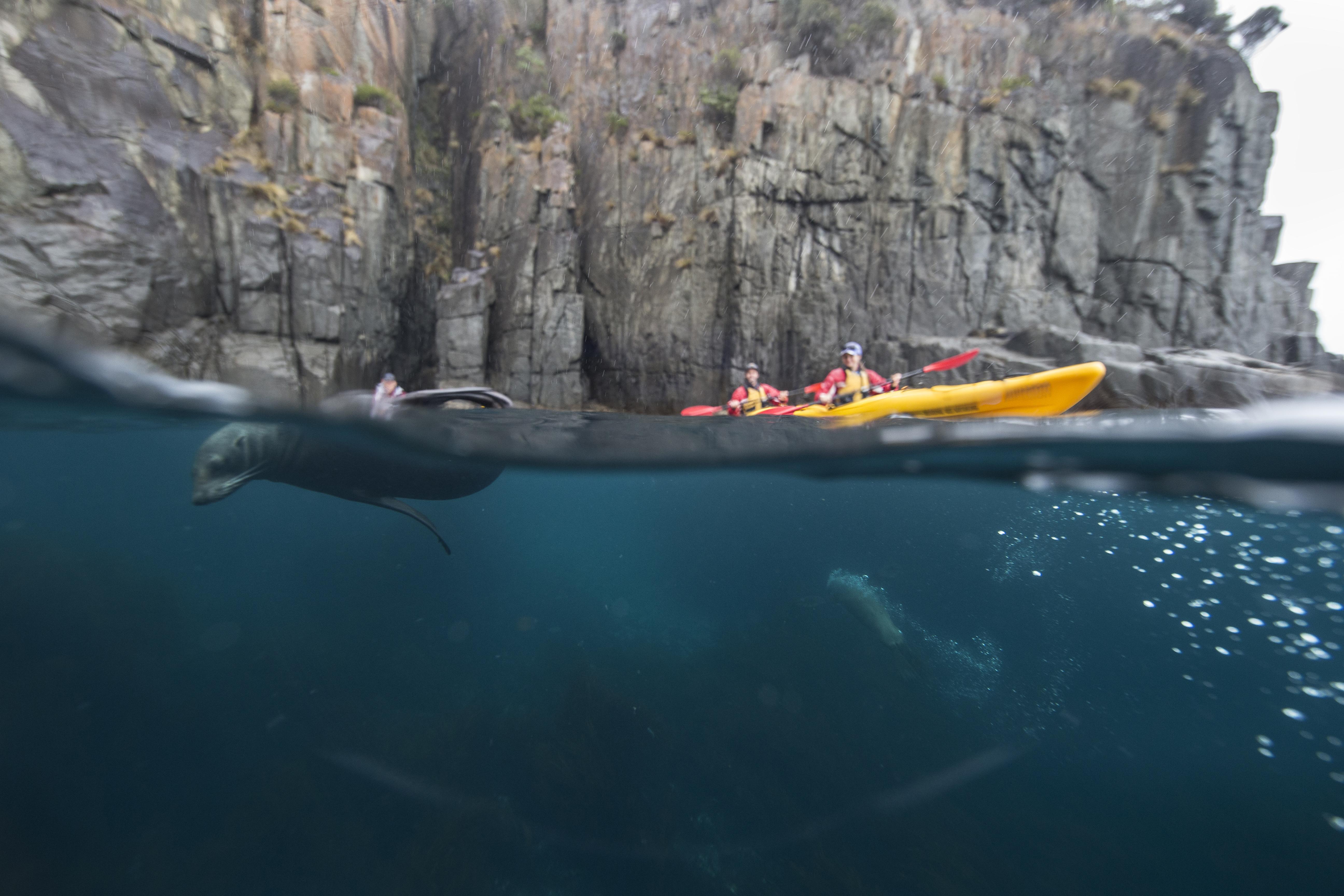 Kayaking with seals on the Tasman Peninsula