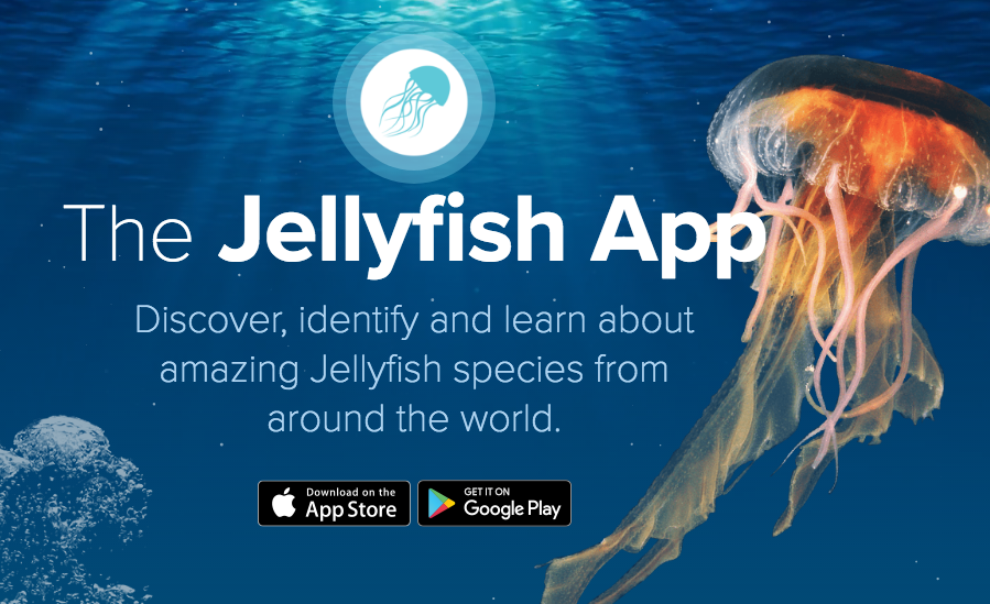 The Jellyfish App