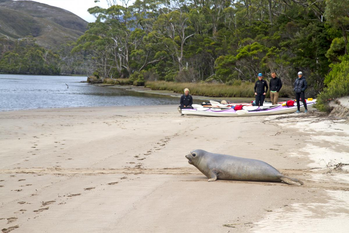 Roaring 40s Kayaking blog - 10 ways to minimise the impact of kayaking on the environment - distance from wildlife