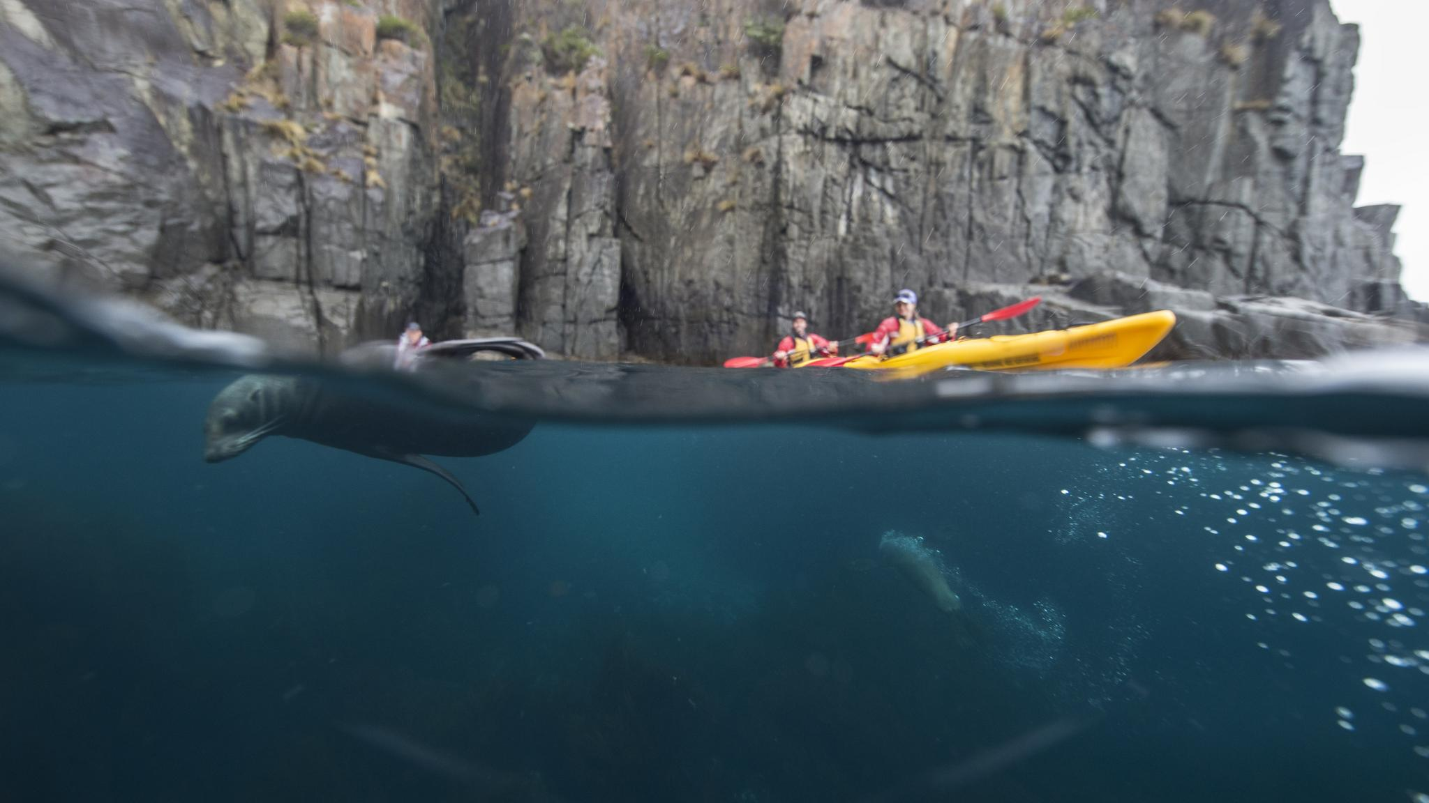 Kayaking Tasman Peninsula with seals
