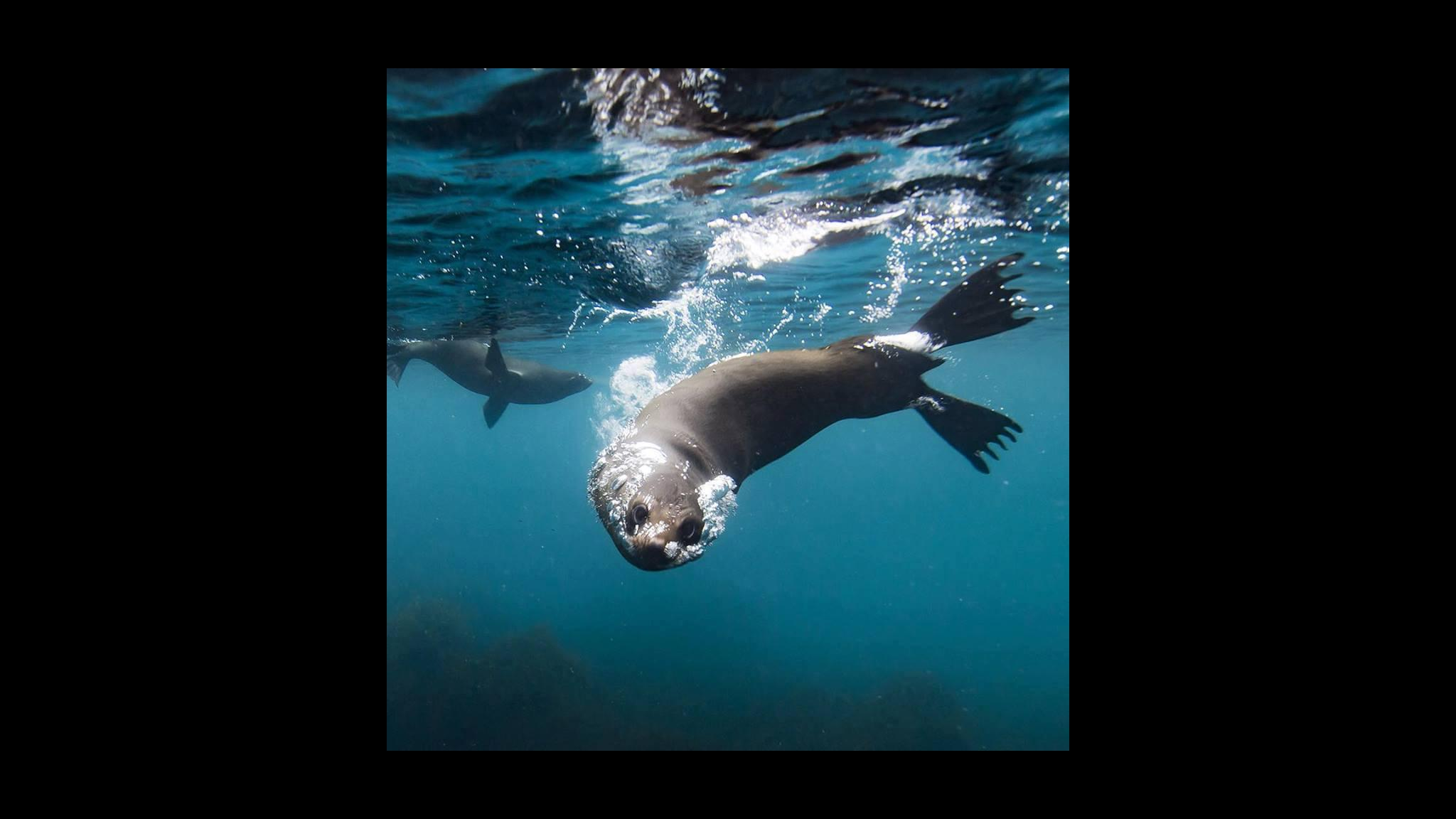 Seal at Fortescue Bay on the Tasman Peninsula